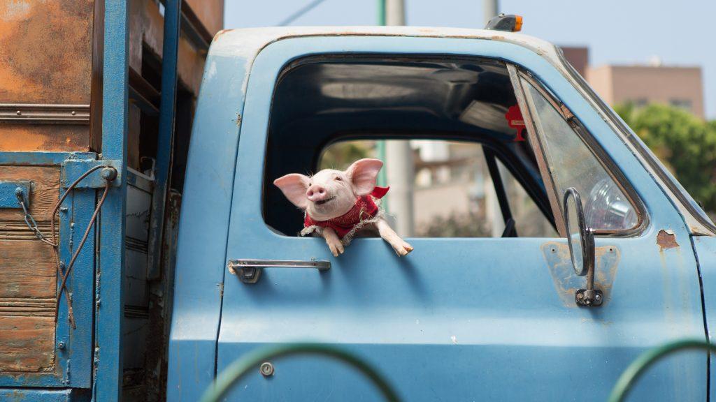 pig holy lands film still
